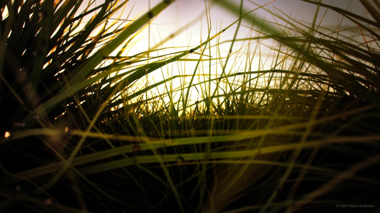 Evening Meadow